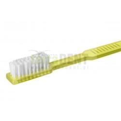 Szczoteczki do zębów z pastą Akzenta MIXED EDITION 100szt